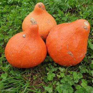 Cabaza Potimarron (1/2 kg a 1 kg)