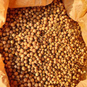 Semilla Cilantro (10 gr)