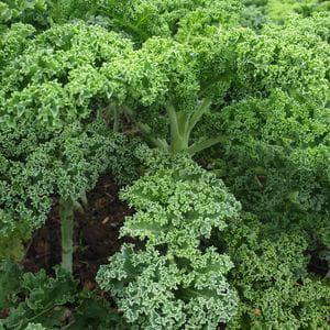Col Kale (250 gr)